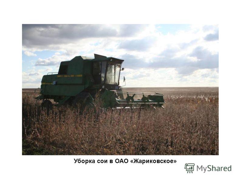 Уборка сои в ОАО «Жариковское»