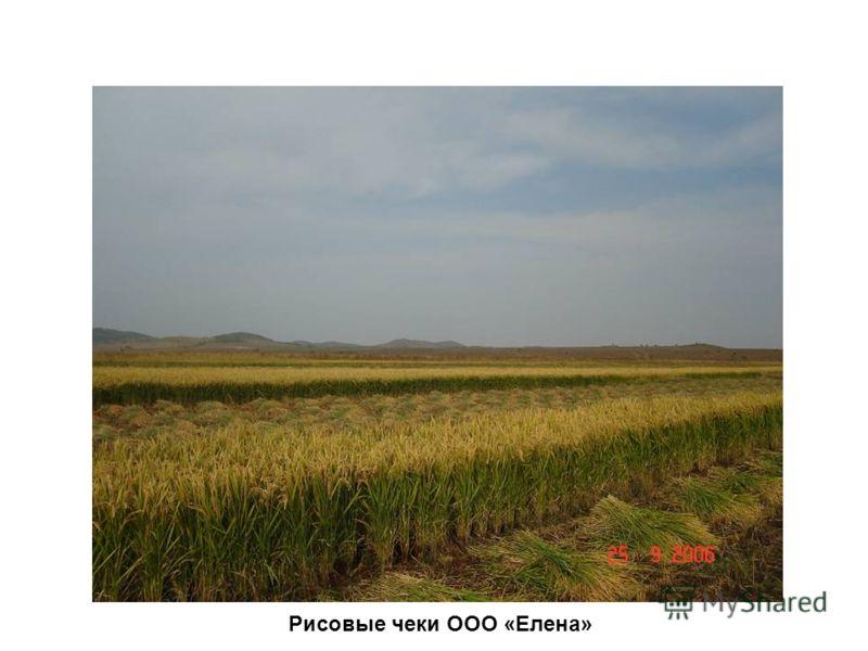Рисовые чеки ООО «Елена»