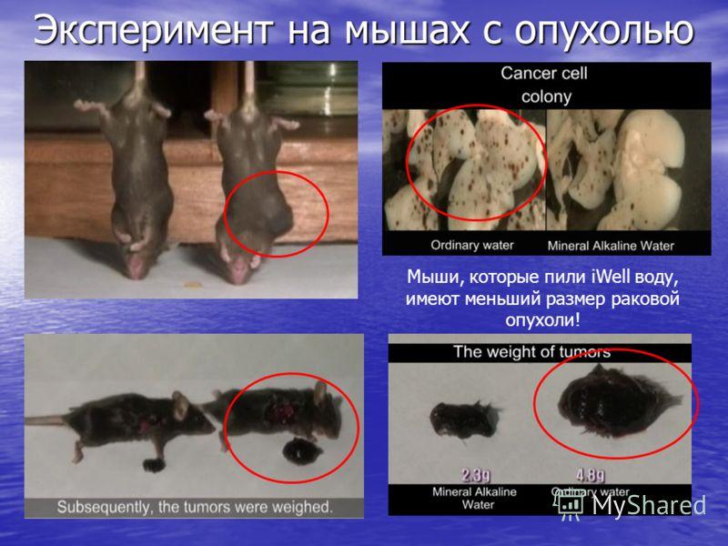 Эксперимент на мышах с опухолью Мыши, которые пили iWell воду, имеют меньший размер раковой опухоли!
