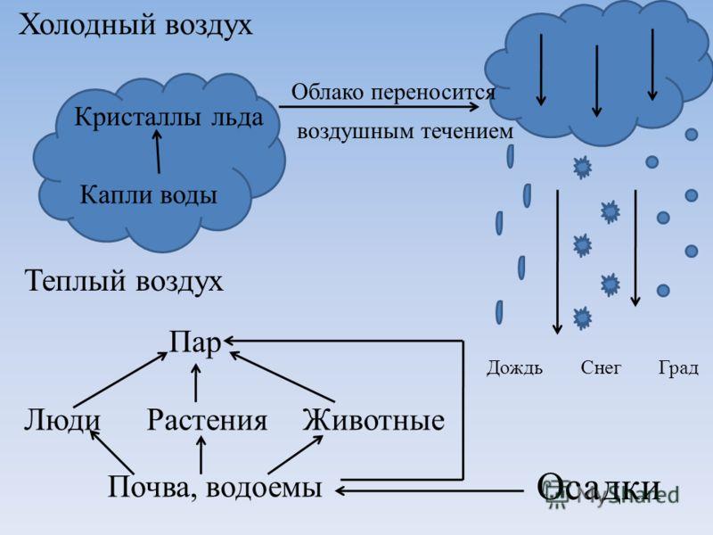 Холодный воздух Теплый воздух Осадки ДождьСнегГрад Капли воды Кристаллы льда Облако переносится воздушным течением РастенияЖивотныеЛюди Пар Почва, водоемы