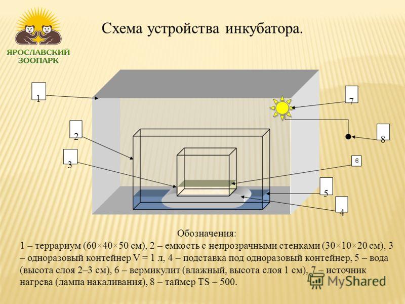 Схема устройства инкубатора. Обозначения: 1 – террариум (60×40×50 см), 2 – емкость с непрозрачными стенками (30×10×20 см), 3 – одноразовый контейнер V = 1 л, 4 – подставка под одноразовый контейнер, 5 – вода (высота слоя 2–3 см), 6 – вермикулит (влаж