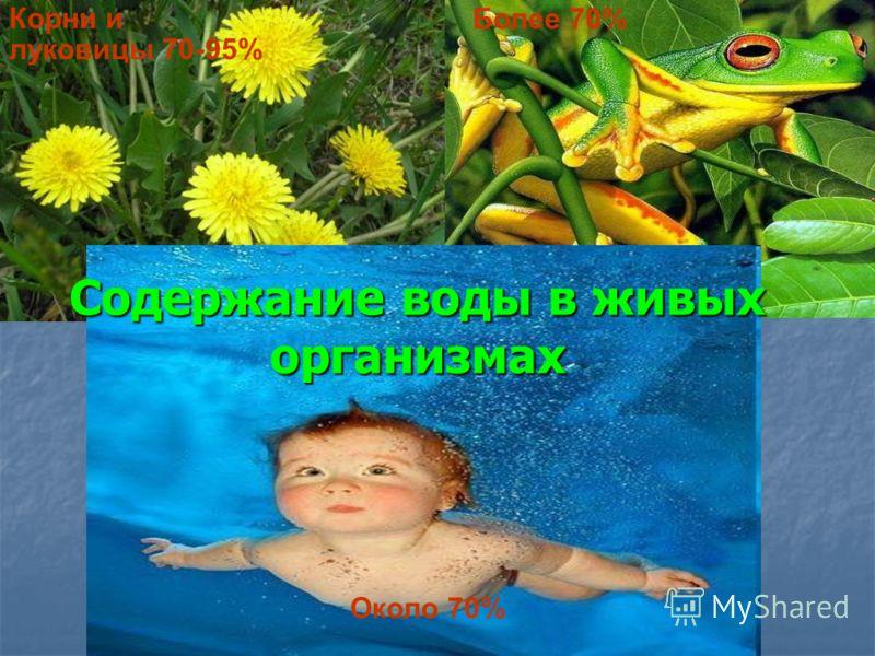 Содержание воды в живых организмах Корни и луковицы 70-95% Более 70% Около 70%