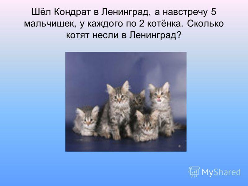 Шёл Кондрат в Ленинград, а навстречу 5 мальчишек, у каждого по 2 котёнка. Сколько котят несли в Ленинград?
