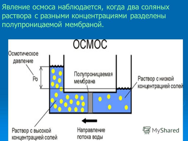 Явление осмоса наблюдается, когда два соляных раствора с разными концентрациями разделены полупроницаемой мембраной.