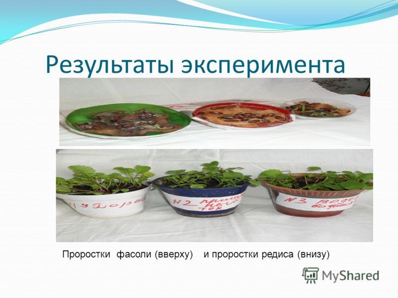 Результаты эксперимента Проростки фасоли (вверху) и проростки редиса (внизу)