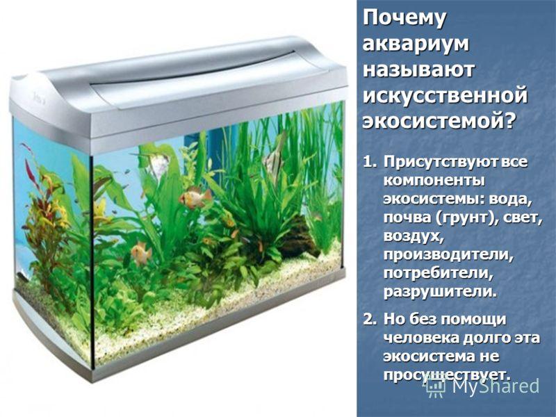Почему аквариум называют искусственной экосистемой? 1.Присутствуют все компоненты экосистемы: вода, почва (грунт), свет, воздух, производители, потребители, разрушители. 2.Но без помощи человека долго эта экосистема не просуществует.