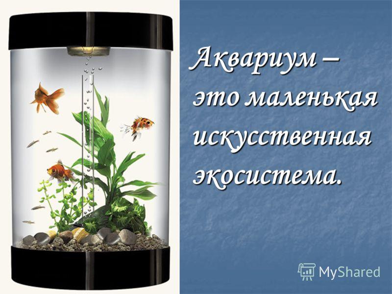 Аквариум – это маленькая искусственная экосистема.