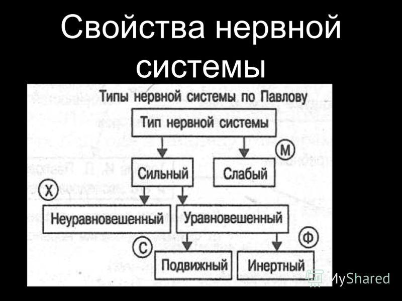 Свойства нервной системы
