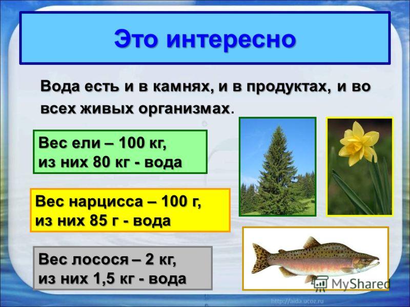 Это интересно Вода есть и в камнях, и в продуктах, и во всех живых организмах Вода есть и в камнях, и в продуктах, и во всех живых организмах. Вес ели – 100 кг, из них 80 кг - вода Вес нарцисса – 100 г, из них 85 г - вода Вес лосося – 2 кг, из них 1,
