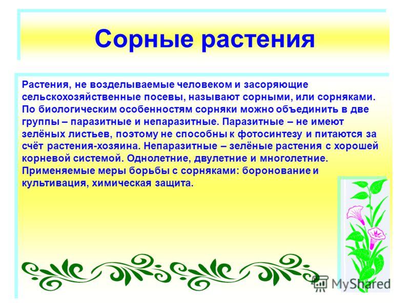 Сорные растения Растения, не возделываемые человеком и засоряющие сельскохозяйственные посевы, называют сорными, или сорняками. По биологическим особенностям сорняки можно объединить в две группы – паразитные и непаразитные. Паразитные – не имеют зел