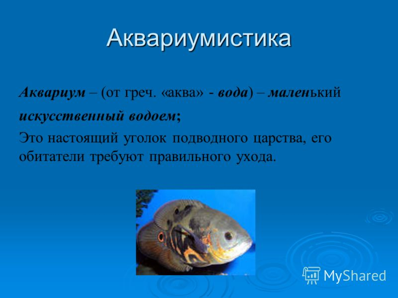 Аквариумистика Аквариум – (от греч. «аква» - вода) – маленький искусственный водоем; Это настоящий уголок подводного царства, его обитатели требуют правильного ухода.