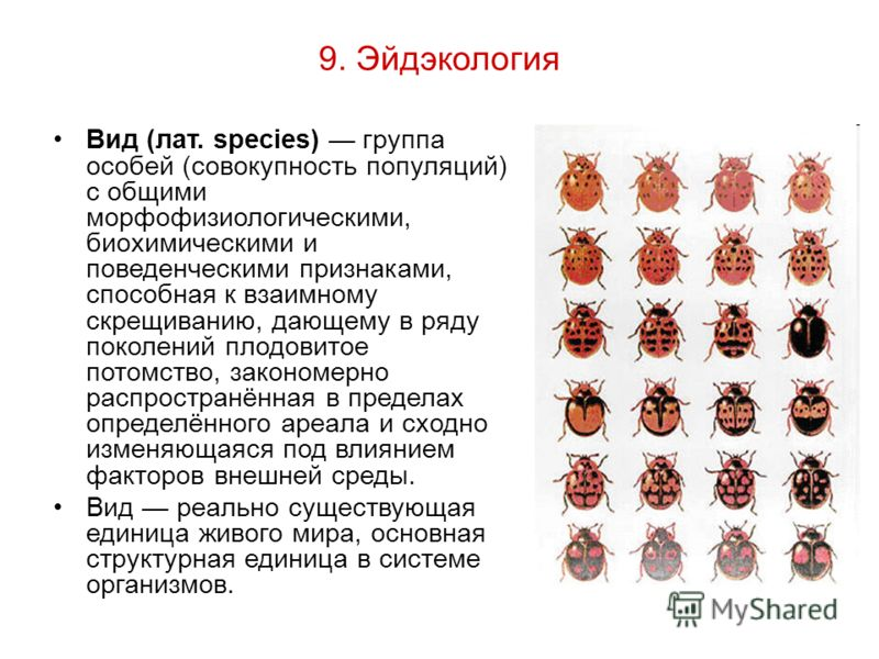9. Эйдэкология Вид (лат. species) группа особей (совокупность популяций) с общими морфофизиологическими, биохимическими и поведенческими признаками, способная к взаимному скрещиванию, дающему в ряду поколений плодовитое потомство, закономерно распрос
