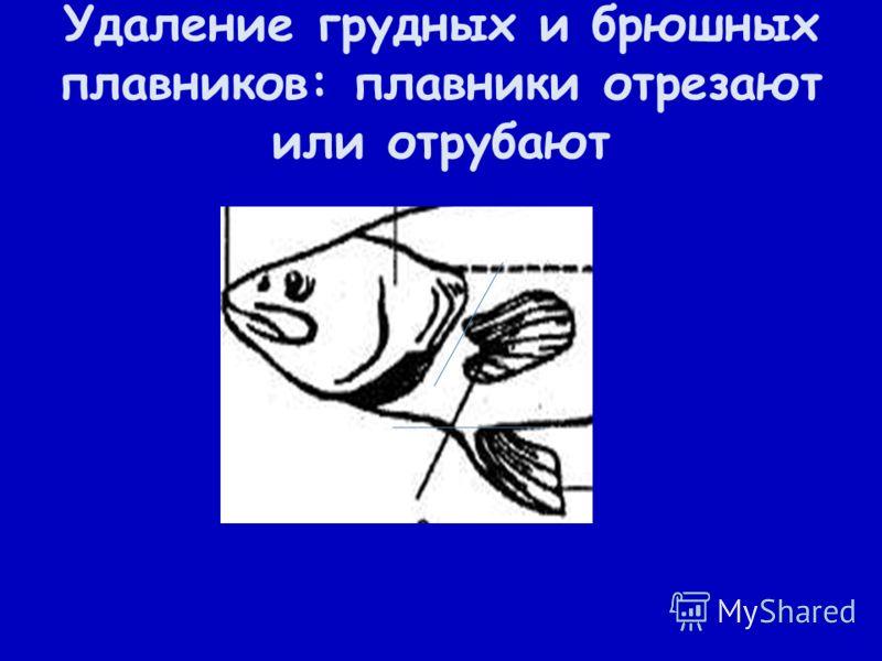 Удаление грудных и брюшных плавников: плавники отрезают или отрубают