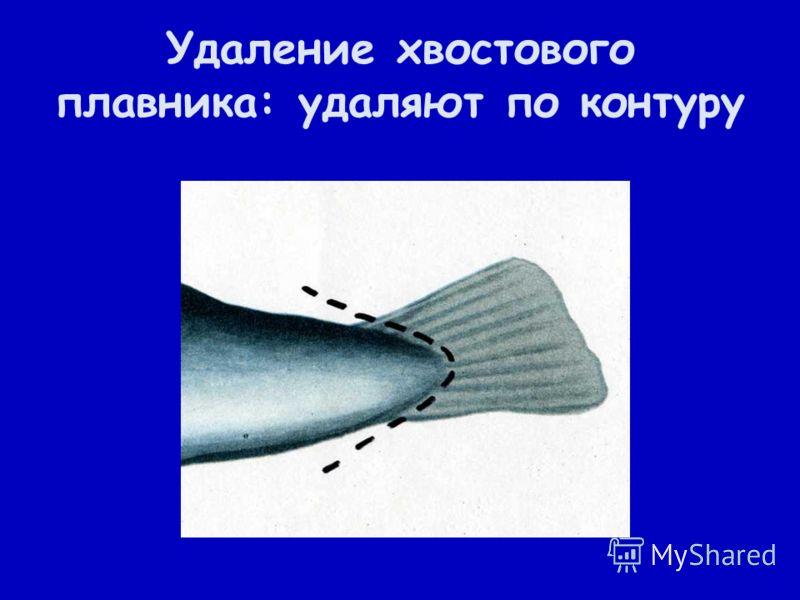 Удаление хвостового плавника: удаляют по контуру