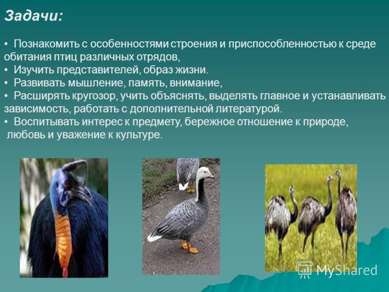 Задачи: Познакомить с особенностями строения и приспособленностью к среде обитания птиц различных отрядов, Изучить представителей, образ жизни. Развивать мышление, память, внимание, Расширять кругозор, учить объяснять, выделять главное и устанавливат
