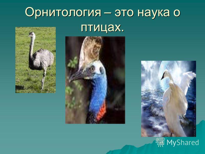 Орнитология – это наука о птицах.