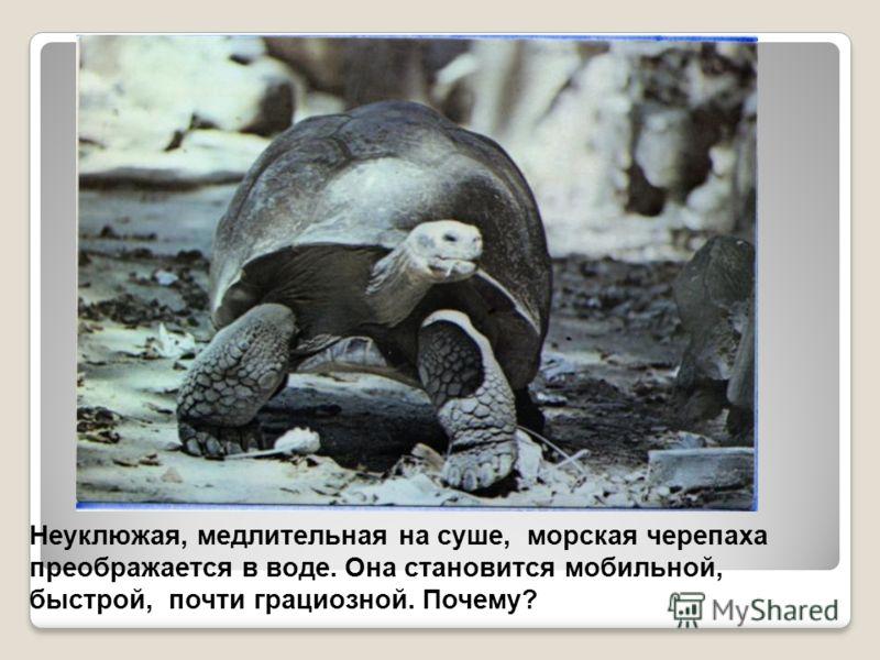 Неуклюжая, медлительная на суше, морская черепаха преображается в воде. Она становится мобильной, быстрой, почти грациозной. Почему?