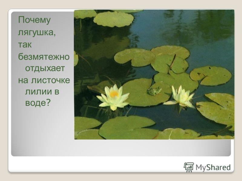 Почему лягушка, так безмятежно отдыхает на листочке лилии в воде ?
