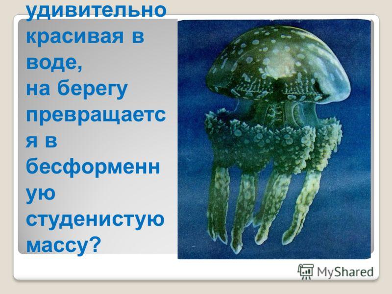 Почему медуза, удивительно красивая в воде, на берегу превращаетс я в бесформенн ую студенистую массу?