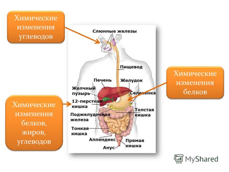 Химические изменения углеводов Химические изменения белков, жиров, углеводов Химические изменения белков