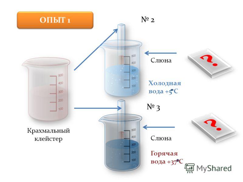 Крахмальный клейстер 2 3 Слюна Холодная вода +5 С Горячая вода +37 С ОПЫТ 1