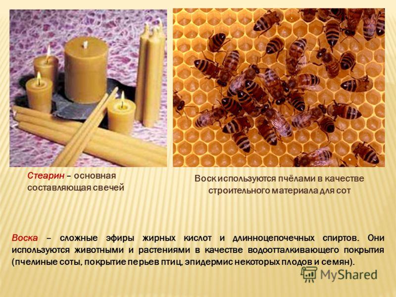 Воск используются пчёлами в качестве строительного материала для сот Воска – сложные эфиры жирных кислот и длинноцепочечных спиртов. Они используются животными и растениями в качестве водоотталкивающего покрытия (пчелиные соты, покрытие перьев птиц,
