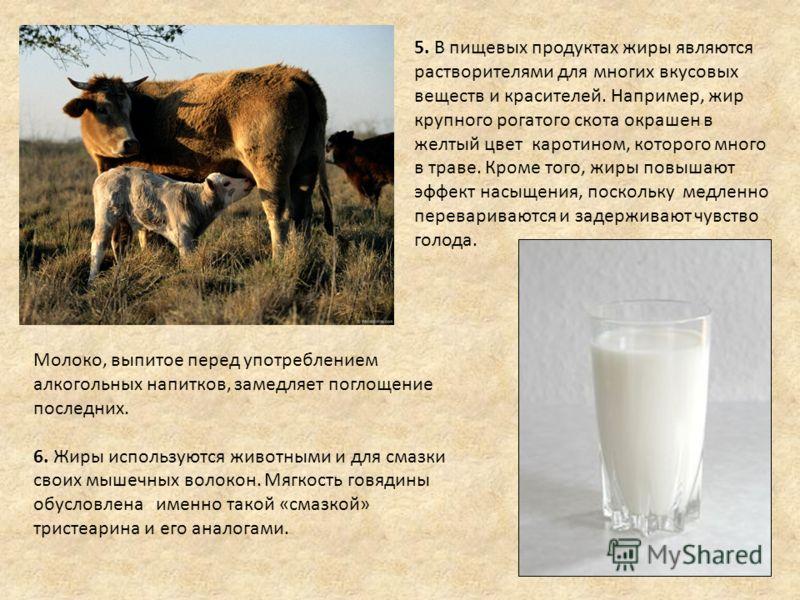 5. В пищевых продуктах жиры являются растворителями для многих вкусовых веществ и красителей. Например, жир крупного рогатого скота окрашен в желтый цвет каротином, которого много в траве. Кроме того, жиры повышают эффект насыщения, поскольку медленн