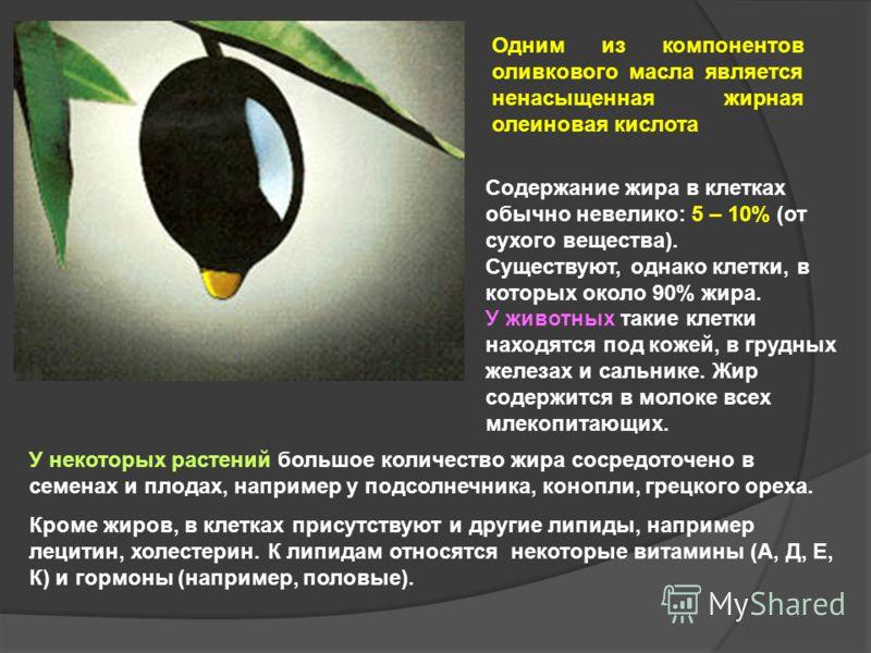 Одним из компонентов оливкового масла является ненасыщенная жирная олеиновая кислота У некоторых растений большое количество жира сосредоточено в семенах и плодах, например у подсолнечника, конопли, грецкого ореха. Кроме жиров, в клетках присутствуют