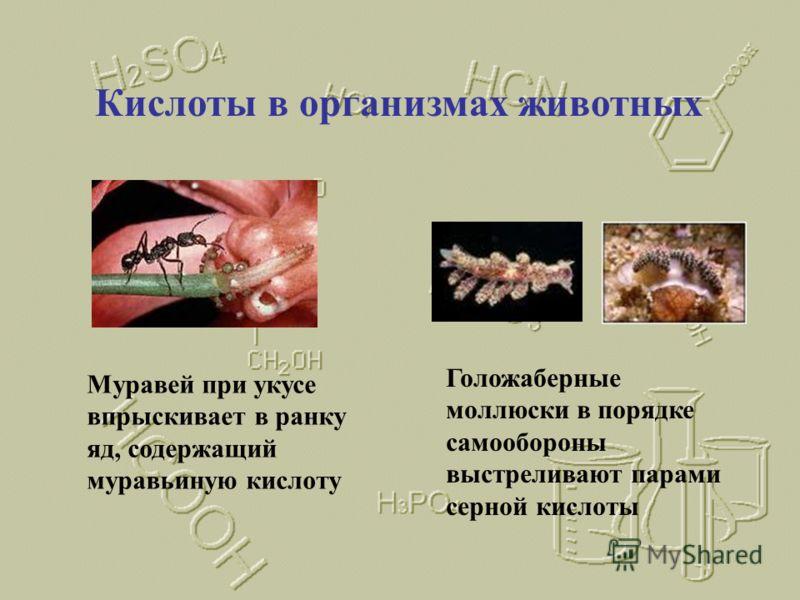 Кислоты в растениях Лишайники выделяют кислоты, называемые лишайниковыми, которые разрушают горные породы В мухоморах в качестве токсина содержится иботеновая кислота