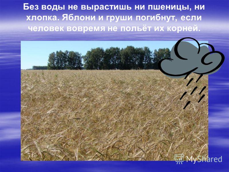 Без воды не вырастишь ни пшеницы, ни хлопка. Яблони и груши погибнут, если человек вовремя не польёт их корней.