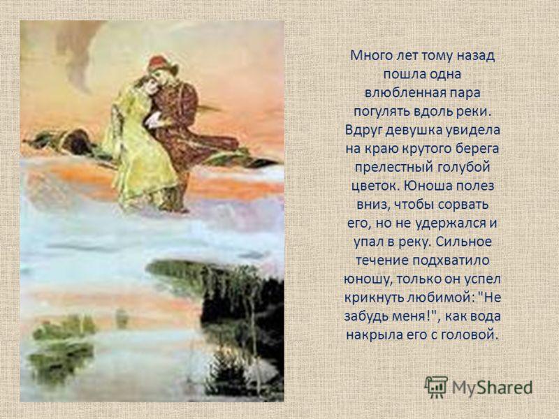Много лет тому назад пошла одна влюбленная пара погулять вдоль реки. Вдруг девушка увидела на краю крутого берега прелестный голубой цветок. Юноша полез вниз, чтобы сорвать его, но не удержался и упал в реку. Сильное течение подхватило юношу, только