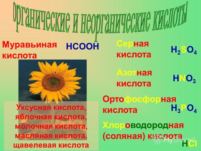 Муравьиная кислота HCOOH Серная кислота H2SO4H2SO4 Уксусная кислота, яблочная кислота, молочная кислота, масляная кислота, щавелевая кислота Азотная кислота HNO3HNO3 Ортофосфорная кислота H3PO4H3PO4 Хлороводородная (соляная) кислота HCl