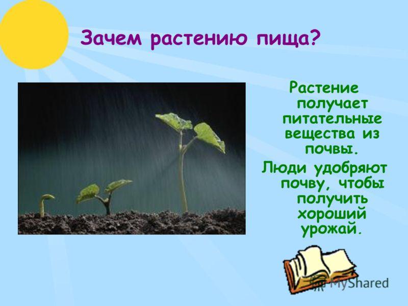 Зачем растению пища? Растение получает питательные вещества из почвы. Люди удобряют почву, чтобы получить хороший урожай.