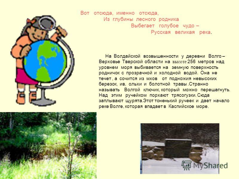 Вот отсюда, именно отсюда, Из глубины лесного родника Выбегает голубое чудо – Русская великая река. На Волдайской возвышенности у деревни Волго – Верховье Тверской области на высоте 256 метров над уровнем моря выбивается на земную поверхность родничо