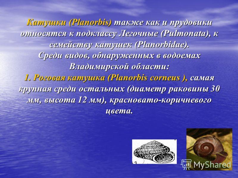Катушки (Planorbis) также как и прудовики относятся к подклассу Легочные (Pulmonata), к семейству катушек (Planorbidae). Среди видов, обнаруженных в водоемах Владимирской области: 1. Роговая катушка (Planorbis corneus ), самая крупная среди остальных