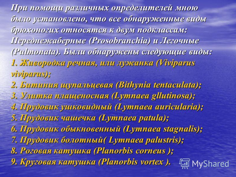При помощи различных определителей мною было установлено, что все обнаруженные виды брюхоногих относятся к двум подклассам: Переднежаберные (Prosobranchia) и Легочные (Pulmonata). Были обнаружены следующие виды: 1. Живородка речная, или лужанка (Vivi