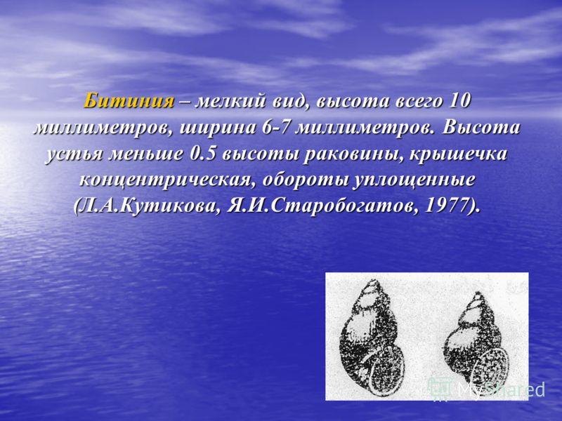 Битиния – мелкий вид, высота всего 10 миллиметров, ширина 6-7 миллиметров. Высота устья меньше 0.5 высоты раковины, крышечка концентрическая, обороты уплощенные (Л.А.Кутикова, Я.И.Старобогатов, 1977).