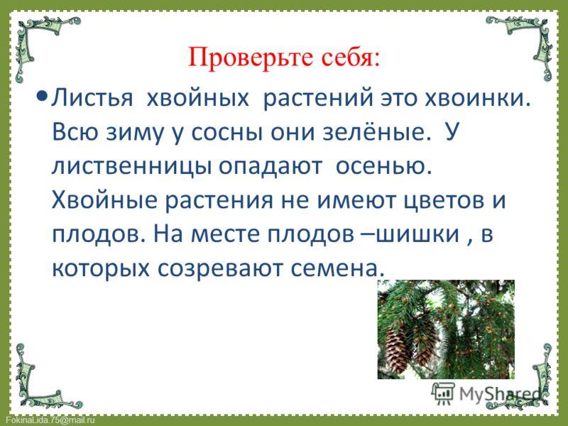 FokinaLida.75@mail.ru Проверьте себя: Листья хвойных растений это хвоинки. Всю зиму у сосны они зелёные. У лиственницы опадают осенью. Хвойные растения не имеют цветов и плодов. На месте плодов –шишки, в которых созревают семена.