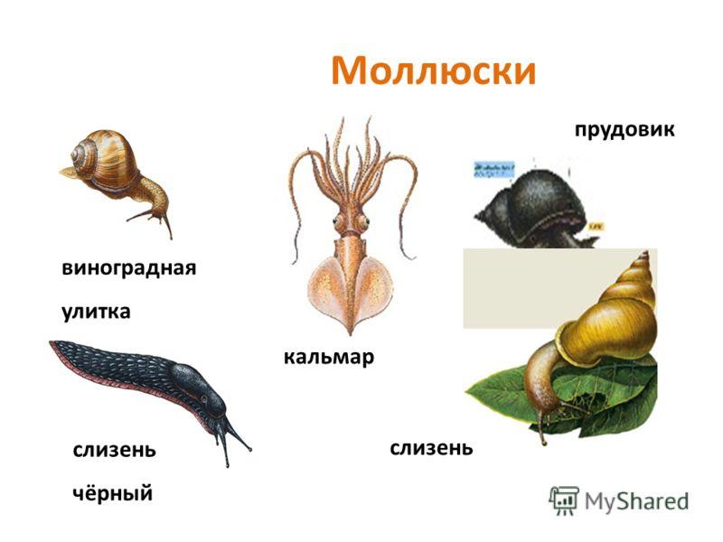 К червям относятся почти 46 тысяч видов животных. Все они удлинённой формы. Передвигаются, изгибая упругое тело. Живут в почве, водоёмах и морях. Дождевые черви помогают улучшать почву. Пиявки используются в медицине. А морские черви являются основны