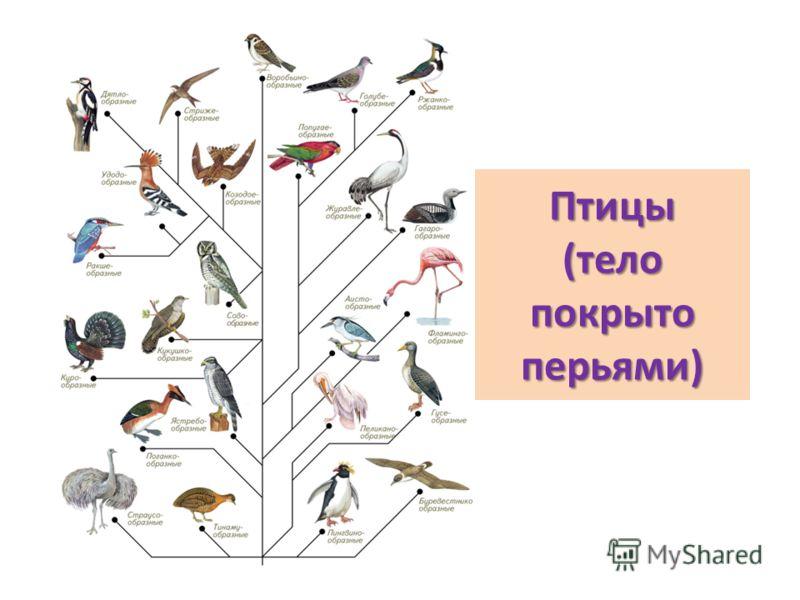 Викторина О Животных