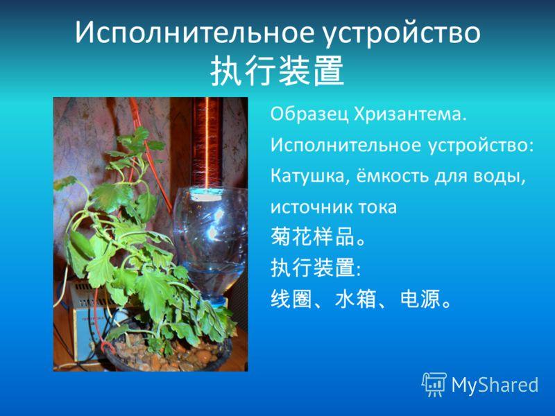 Исполнительное устройство Образец Хризантема. Исполнительное устройство: Катушка, ёмкость для воды, источник тока :