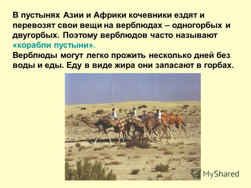 В пустынях Азии и Африки кочевники ездят и перевозят свои вещи на верблюдах – одногорбых и двугорбых. Поэтому верблюдов часто называют «корабли пустыни». Верблюды могут легко прожить несколько дней без воды и еды. Еду в виде жира они запасают в горба