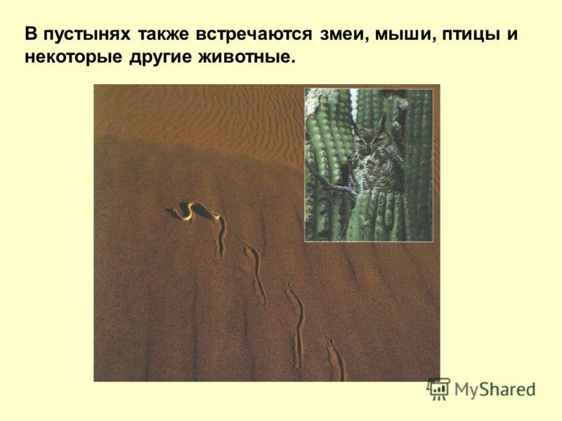 В пустынях также встречаются змеи, мыши, птицы и некоторые другие животные.