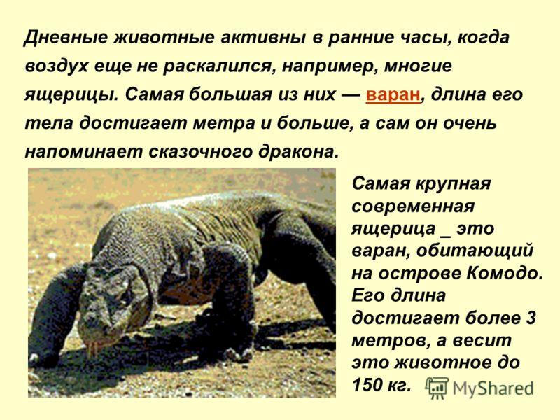 Дневные животные активны в ранние часы, когда воздух еще не раскалился, например, многие ящерицы. Самая большая из них варан, длина его тела достигает метра и больше, а сам он очень напоминает сказочного дракона. Caмaя кpyпнaя coвpeмeннaя ящepицa _ э