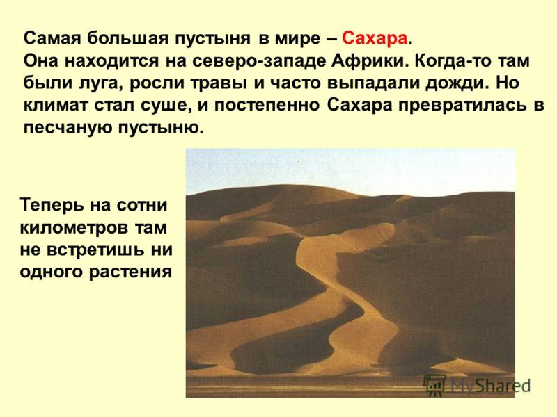 Самая большая пустыня в мире – Сахара. Она находится на северо-западе Африки. Когда-то там были луга, росли травы и часто выпадали дожди. Но климат стал суше, и постепенно Сахара превратилась в песчаную пустыню. Теперь на сотни километров там не встр