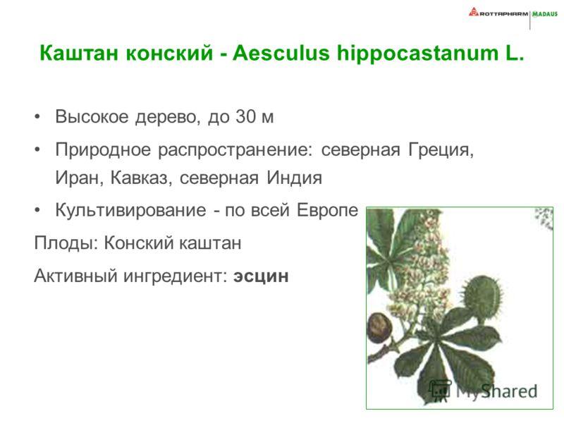 Каштан конский - Aesculus hippocastanum L. Высокое дерево, до 30 м Природное распространение: северная Греция, Иран, Кавказ, северная Индия Культивирование - по всей Европе Плоды: Конский каштан Активный ингредиент: эсцин