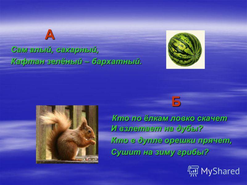 А Сам алый, сахарный, Кафтан зелёный – бархатный. Б Б Кто по ёлкам ловко скачет И взлетает на дубы? Кто по ёлкам ловко скачет И взлетает на дубы? Кто в дупле орешки прячет, Кто в дупле орешки прячет, Сушит на зиму грибы? Сушит на зиму грибы?