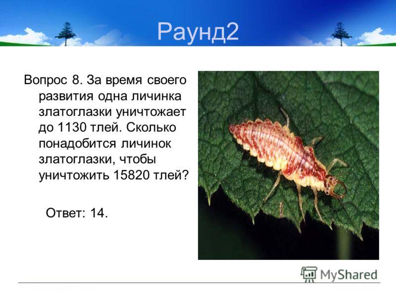 Раунд2 Вопрос 8. За время своего развития одна личинка златоглазки уничтожает до 1130 тлей. Сколько понадобится личинок златоглазки, чтобы уничтожить 15820 тлей? Ответ: 14.