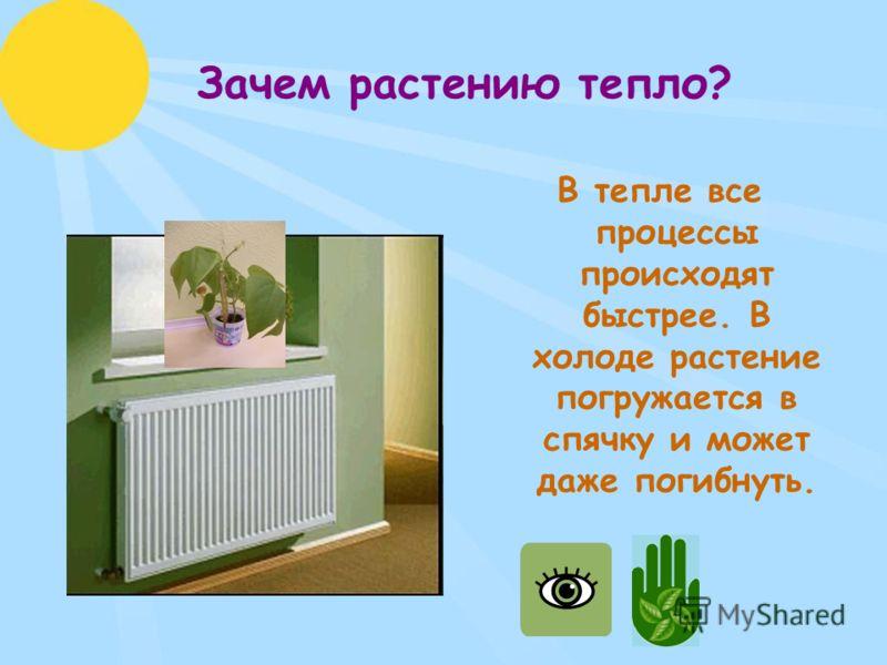 Зачем растению тепло? В тепле все процессы происходят быстрее. В холоде растение погружается в спячку и может даже погибнуть.