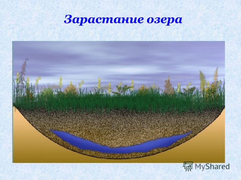 Зарастание озера